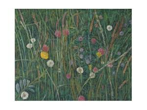 Plants of the Machair, 2008 by Ruth Addinall