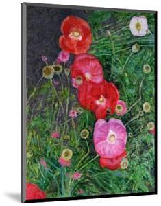 Poppies by Ruth Addinall