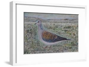 Turtle Dove by Ruth Addinall