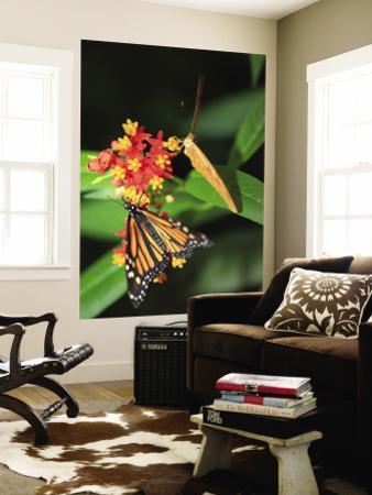 Butterflies Including Monarch Butterfly (Danaus Plexippus)