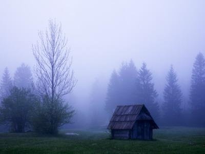 Wooden Barn and Trees with Dawn Mist Near Southern Shore of Lake Bohinj