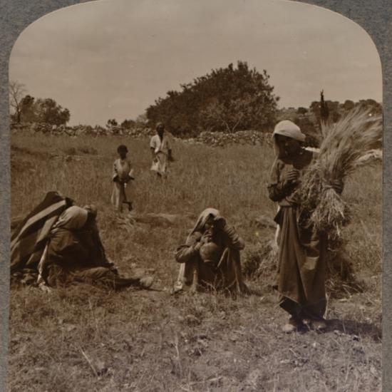 'Ruth gleaning in the Fields of Boaz', c1900-Unknown-Photographic Print