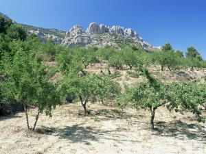 Almond Trees in the Sierra De Aitana, Alicante Area, Valencia, Spain by Ruth Tomlinson