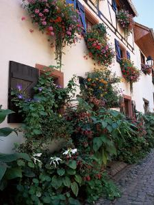 Flower-Filled Village Street, Eguisheim, Haut-Rhin, Alsace, France by Ruth Tomlinson