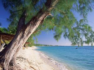 Leaning Tree Above Calm Turquoise Sea, Seven Mile Beach, Grand Cayman, Cayman Islands, West Indies by Ruth Tomlinson
