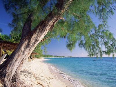 Leaning Tree Above Calm Turquoise Sea, Seven Mile Beach, Grand Cayman, Cayman Islands, West Indies