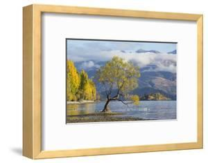 Lone willow tree growing at the edge of Lake Wanaka, autumn, Roys Bay, Wanaka, Queenstown-Lakes dis by Ruth Tomlinson