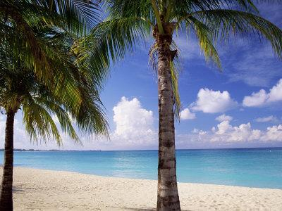 Palm Trees, Beach and Still Turquoise Sea, Seven Mile Beach, Cayman Islands, West Indies