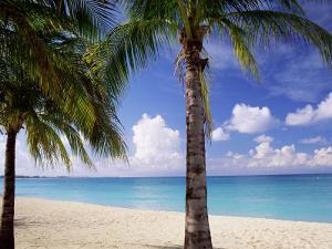 Palm Trees, Beach and Still Turquoise Sea, Seven Mile Beach, Cayman Islands, West Indies by Ruth Tomlinson