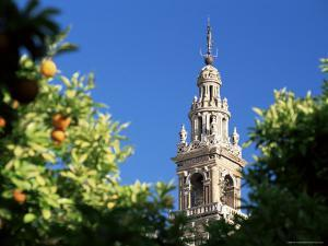 Top of the Giralda Framed by Orange Trees, Seville, Andalucia (Andalusia), Spain, Europe by Ruth Tomlinson