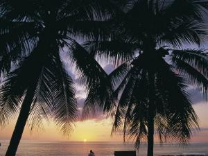 Tropical Sunset Framed by Palm Trees, Cayman Islands, West Indies, Central America by Ruth Tomlinson