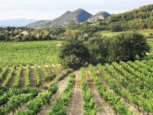 View to Distant Village Across Vineyards, Seguret, Vaucluse, Provence, France, Europe by Ruth Tomlinson