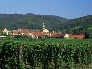 View to Village from Vineyards, Riquewihr, Haut-Rhin, Alsace, France by Ruth Tomlinson