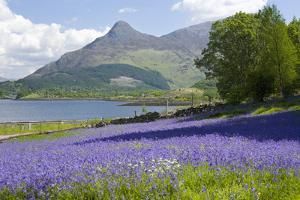 Wild Bluebells (Hyacinthoides Non-Scripta) Beside Loch Leven by Ruth Tomlinson