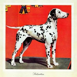 """""""Dalmatians,"""" July 17, 1943 by Rutherford Boyd"""