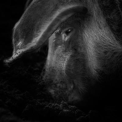 A Piggy Thing by Ruud Peters
