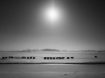 Flatlands, no. 6 by Ruud Peters