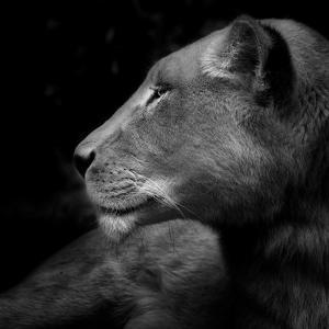 Her Majesty by Ruud Peters