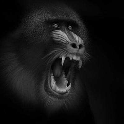 Scream by Ruud Peters