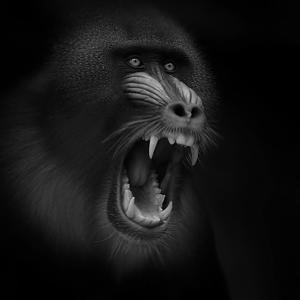 Scream by Ruud Peters