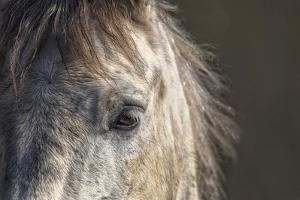 Grey Horse by Ryan Courson Photography
