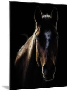 Horse in Backlight by Ryan Courson Photography