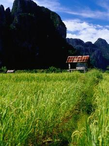 Stilted House Surrounded by Limestone Cliffs and Fields, Vang Vieng, Laos by Ryan Fox