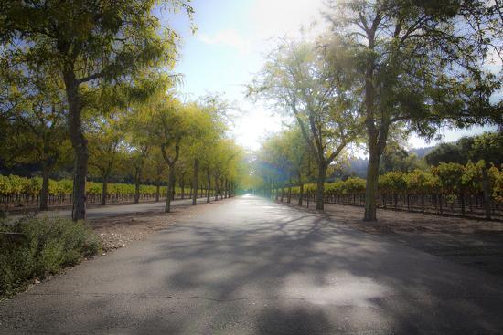 ryan-hartson-weddle-into-the-vineyard