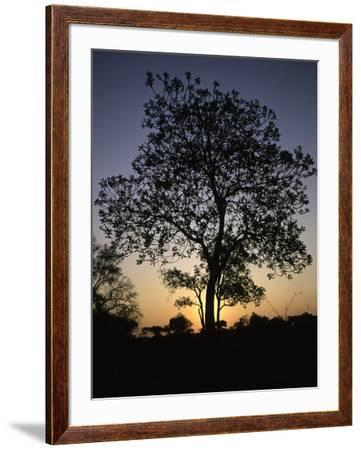 Tree at Sunset, South Africa