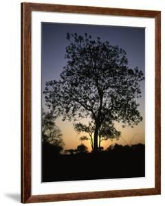 Tree at Sunset, South Africa by Ryan Ross