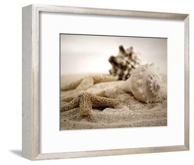 Seashells In The Sand