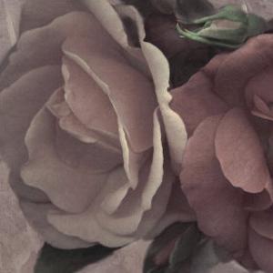 Parfum I by S. G. Rose