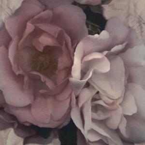 Parfum IV by S. G. Rose