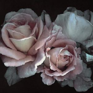 Romance by S^ G^ Rose