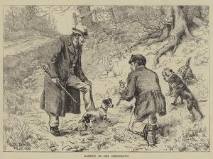 Ratting in the Hedgerows by S.t. Dadd