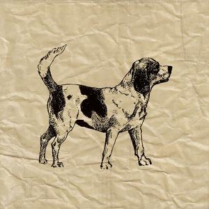 Beagle by Sabine Berg