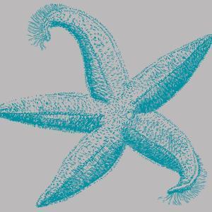 Sea Stars I by Sabine Berg