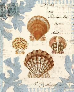 Seashell Collection I by Sabine Berg