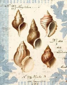 Seashell Collection II by Sabine Berg