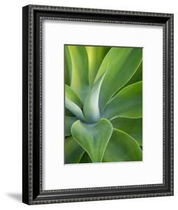 Green Succulent Plant at Botanical Gardens by Sabrina Dalbesio