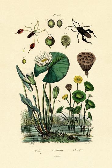 Sacred Lotus, 1833-39--Giclee Print