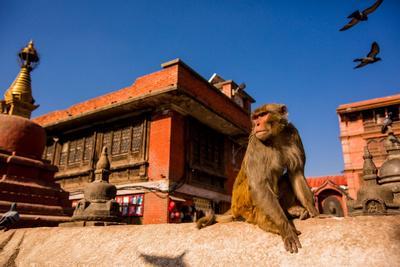 https://imgc.artprintimages.com/img/print/sacred-monkey-temple-kathmandu-nepal-asia_u-l-q1bsj8l0.jpg?p=0