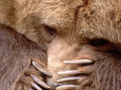 Sad Grizzly Bear-Terry Eggers-Photographic Print