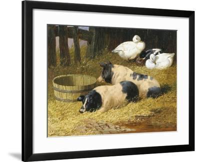 Saddleback Pigs and Ducks in a Farmyard-John Frederick Herring II-Framed Giclee Print