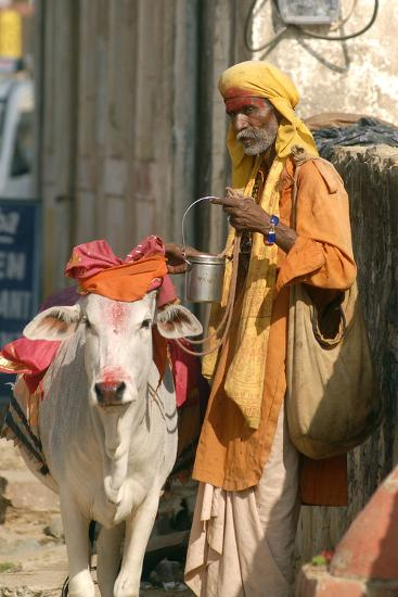 Sadhu, Holy Man, with Cow During Pushkar Camel Festival, Rajasthan, Pushkar, India-David Noyes-Photographic Print