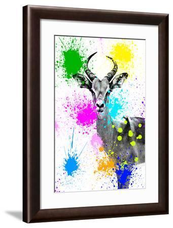 Safari Colors Pop Collection - Antelope Reedbuck V-Philippe Hugonnard-Framed Giclee Print