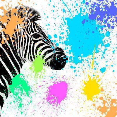 Safari Colors Pop Collection - Zebra-Philippe Hugonnard-Giclee Print