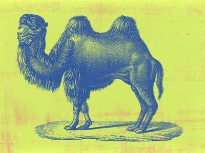 https://imgc.artprintimages.com/img/print/safari-pop-iv_u-l-q1gwf9g0.jpg?p=0