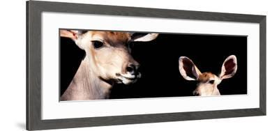 Safari Profile Collection - Antelope and Baby Black Edition III-Philippe Hugonnard-Framed Photographic Print