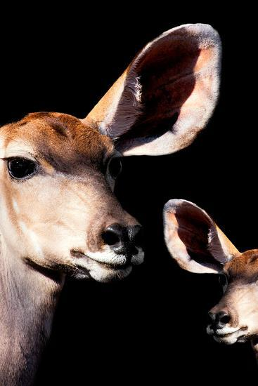 Safari Profile Collection - Antelope and Baby Black Edition V-Philippe Hugonnard-Photographic Print
